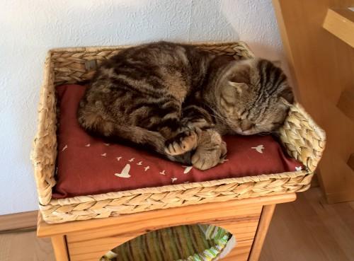 Katzenkörbchen Bezug nähen